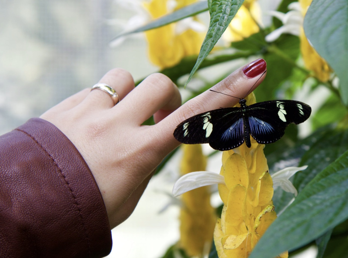 Girl touching a butterfly